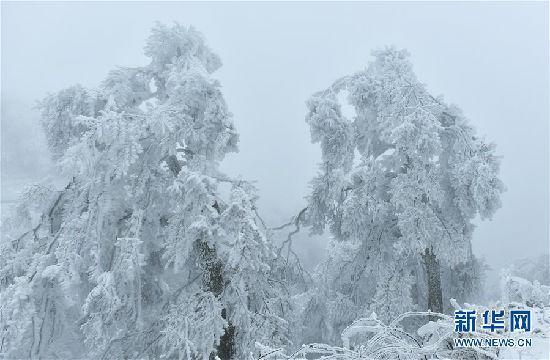 """恩施高山地区现冰冻现象 出现""""冰雕""""森林"""