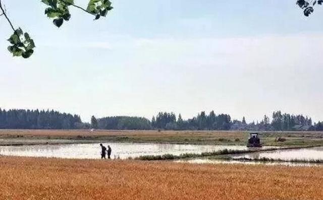 潜江4个村入选这个省级示范项目 每个村奖励十万元