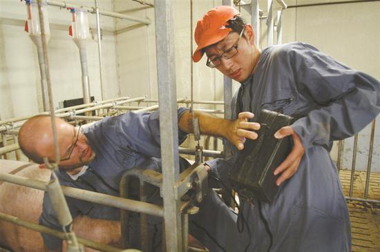 三名大学老师法国留学养猪