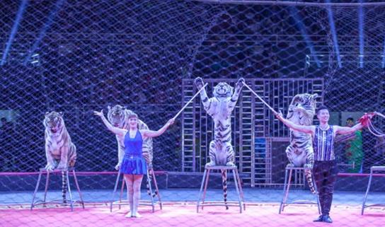 超级大马戏·2017国际马戏小丑嘉年华武汉站开票啦