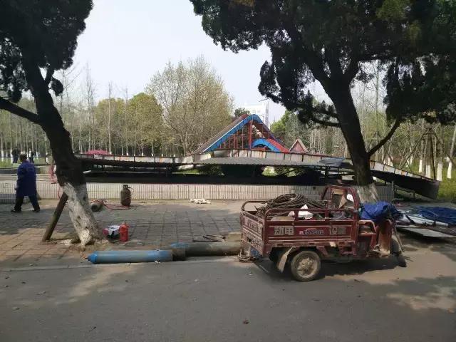 """荆州城区最大银杏林在中山公园""""诞生""""(图)"""