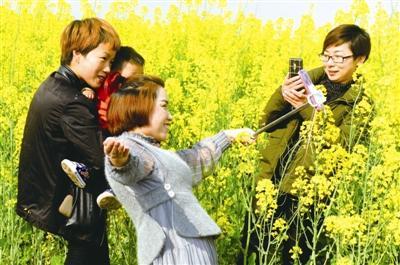 潜江一地万亩油菜花竞相开放 吸引大批游客游玩