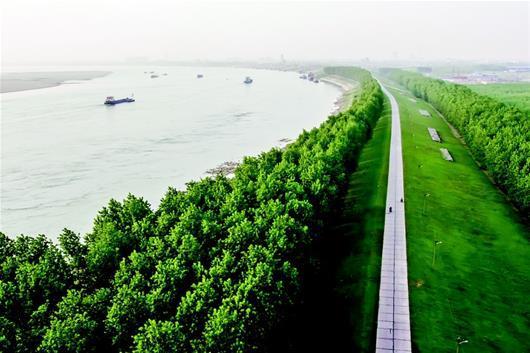 图为:江流伴新绿——荆州长江防护林.图片