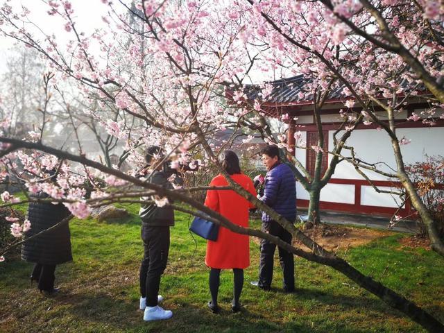 2018武汉东湖樱花节开幕 赏樱指南公布(图)
