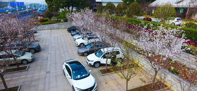 武汉最美樱花停车场 樱花树醉倒停车人