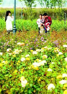 """大冶玫瑰开满园 看""""花炮之乡""""美丽新变化"""