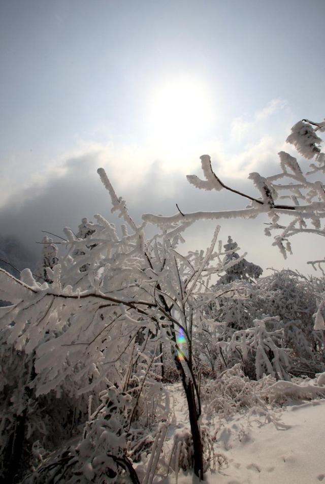 宜昌天柱山雪景美到想哭 雾凇等奇观惊为天作