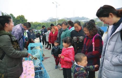 宜昌开展动物领养日活动 20余只动物找到新主人
