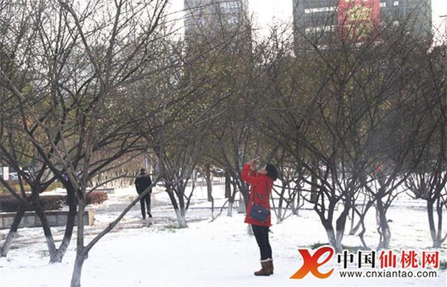仙桃市政广场寒梅绽放 市民被吸引驻足欣赏