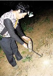 宜昌村民夜晚集体上山抓蜈蚣 有人一夜能抓500条