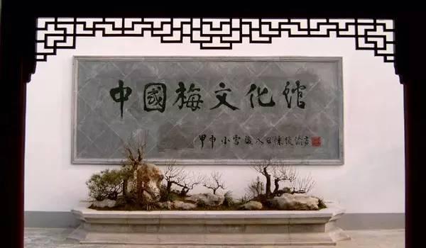 又是一年蜡梅开 武汉这里的梅花美得不像话