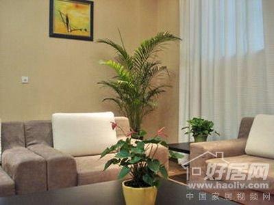 客厅的摆放植物风水讲究[图]