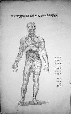 女性人体内脏结构图_五脏六腑高清大图片_女性内脏器官图分布图剧情