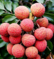 夏季3种当红水果 孕妇忍忍再吃
