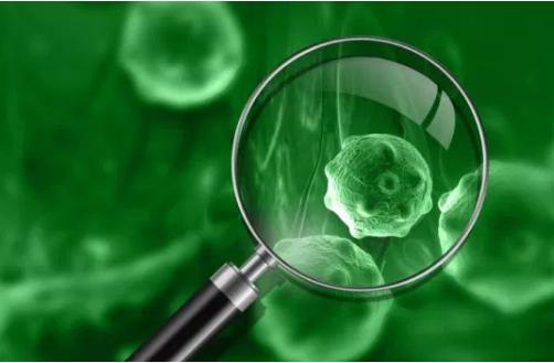 恶性肿瘤中枢淋巴瘤治疗药物有了新组合