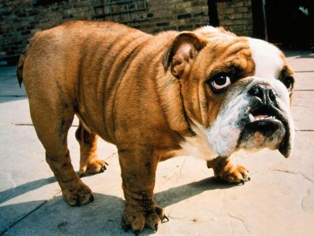 正视狂犬病防备非康复 但不克不及剖腹藏珠