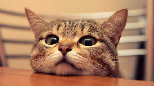 猫抓病秋冬季高发 被舔眼睛也有感染风险