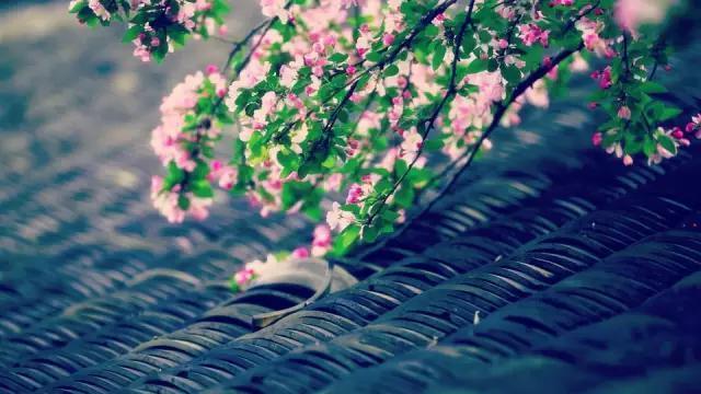 谷雨时节,要做好春季养生的最后一课