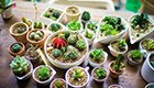 吸毒植物帮你清新空气