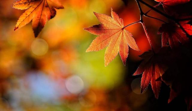 药补不如食补,秋季进补谨记这四个禁忌