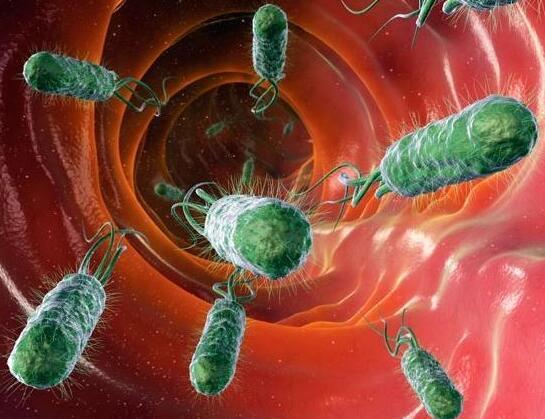 四联疗法根除幽门螺杆菌,胃却更难受,要放弃服