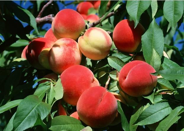 女人生理期能够吃的水果都有那些呢?