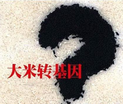 转基因大米新闻_武汉市场出现转基因大米湖北省工作队迅速展