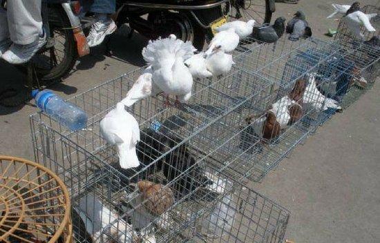 广州一卖鸽女子不明原因猝死 无流感症状