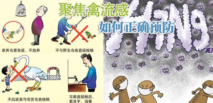 如何预防禽流感_最近禽流感这么厉害,还敢吃鸡吗?