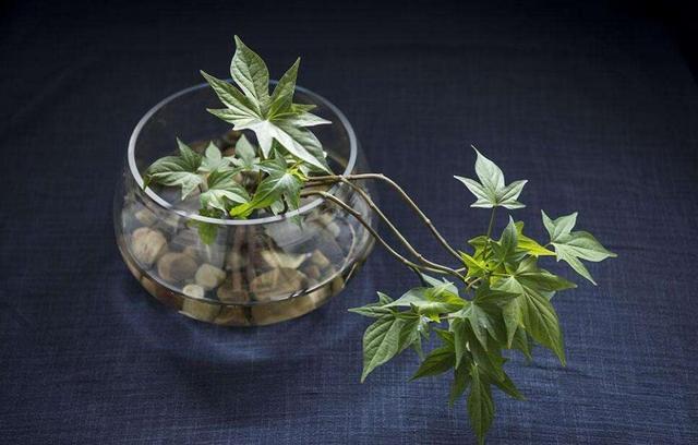 快来看!四种有害植物放室内等于慢性自杀