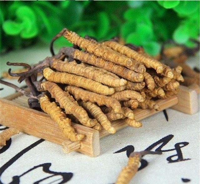 吃冬虫夏草有方法 冬虫夏草这样吃更营养
