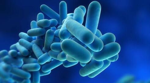 益生菌怎么吃效果好?V生态益生菌告诉你