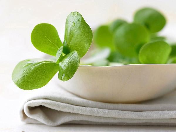 春天不能缺的四种野菜:马齿苋护心脏!