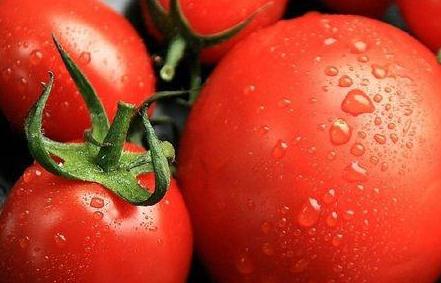 孕妇适量食用小番茄身体好
