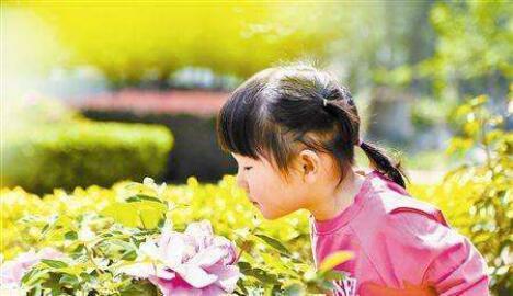 春季出游需注意!这些花会致人中毒或过敏