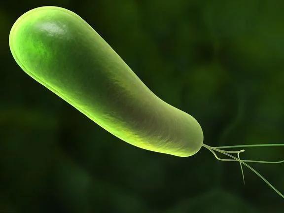 清除口腔幽门螺杆菌,预防和根除的关键所在