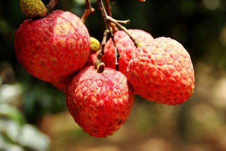 每个月的陪伴,女人生理期能吃什么水果?