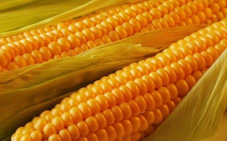 湖南黄金大米案件后又曝出美国黄金玉米案