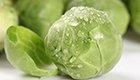 夸张!蔬菜狂热者称卷心菜汁可治疗癌症