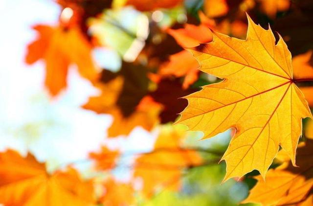 秋季把养胃护胃进行到底,做到饮食有节