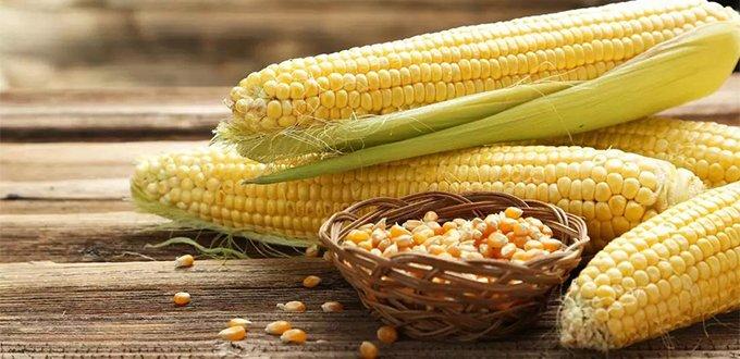玉米是个好食材