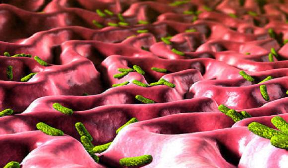 幽门螺杆菌总是难根除?除了耐药性,大部分人都忽视了它!