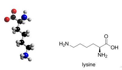 赖氨酸的作用是什么 专家为你解答