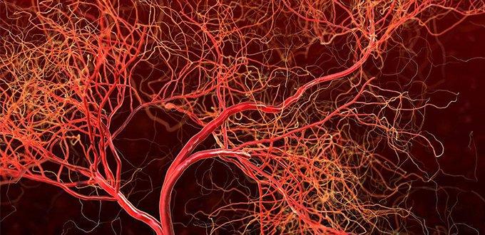 """""""关于血管的那些传言是对是错?</"""