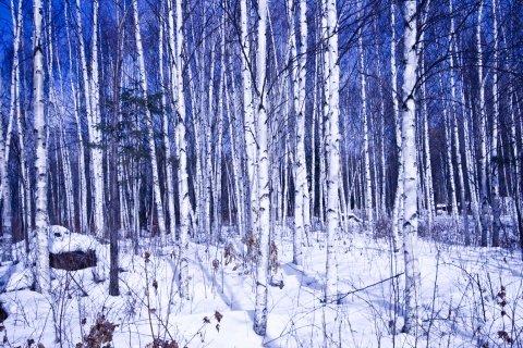 大寒——天冷保健多误区