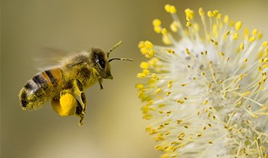 孕妇与蜜蜂拍孕照/