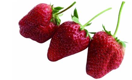 maca玛卡 天天用牛奶浇也种不出牛奶草莓