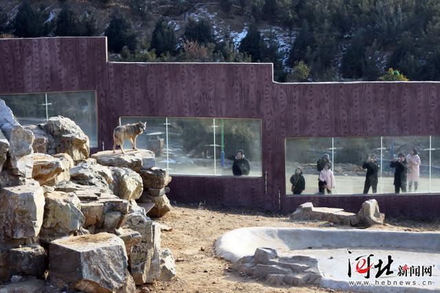 邯郸佛山野生动物园开园迎客 百余种野生动物亮相