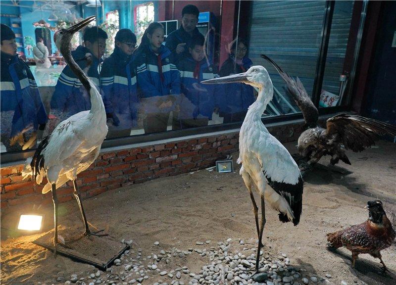 北戴河青少年鸟类科普实践教育基地