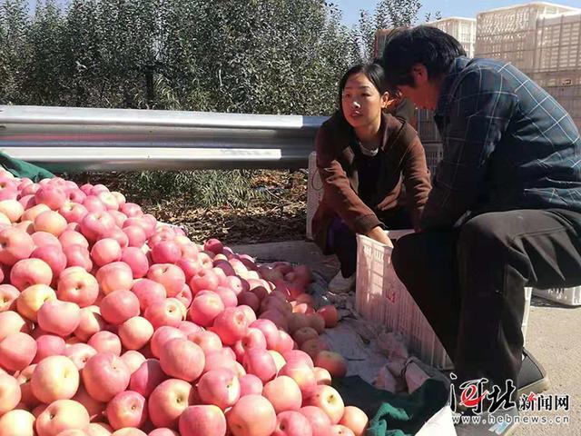 """苹果熟了!邢台第三届""""浆水苹果""""文化节开幕"""